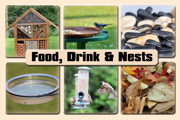 Food, Drink & Nests